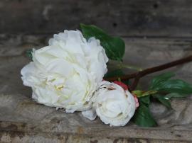 Fleur Pion H53 cm vit , hemmetshjarta.no