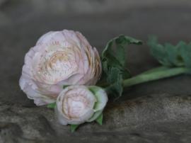 Fleur Ranunkel H40 cm krem , hemmetshjarta.no