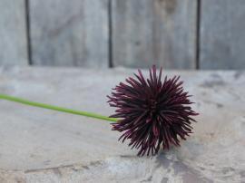 Fleur Dahlia H68 cm burgunder , hemmetshjarta.no