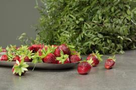 Kunstig jordbær 4cm 10-pack , hemmetshjarta.no