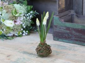 Fleur Pearl hyacintpære H25 cm hvit , hemmetshjarta.no