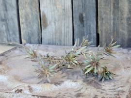 Fleur Gren med blader H72 cm grønn , hemmetshjarta.no