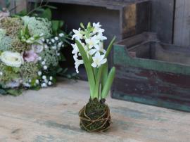 Fleur Hyacinth løk H24 cm hvit , hemmetshjarta.no