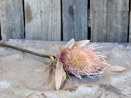 Fleur Protea Blomst H60 cm gammel. rosa , hemmetshjarta.no