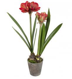 Kunstig Amaryllis i krukke Rød 90 cm , hemmetshjarta.no