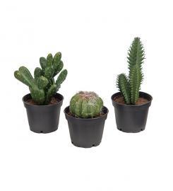 Kunstig Kaktus mix 3-pack , hemmetshjarta.no