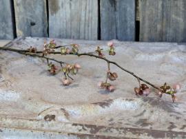 Fleur Gren med frøkapsler H84 cm , hemmetshjarta.no