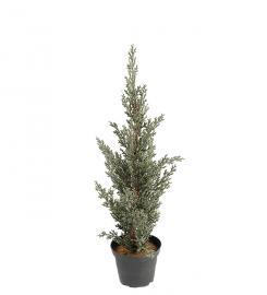 Kunstig Cypress 40 cm , hemmetshjarta.no