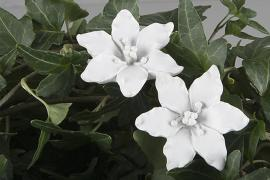 Blomst / Stick Lily Hvit 4cm 2-pak , hemmetshjarta.no