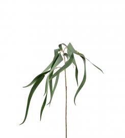 Eukalyptus 70 cm , hemmetshjarta.no