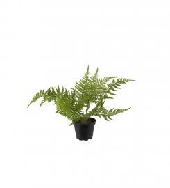 Kunstig Asparagus 25 cm , hemmetshjarta.no