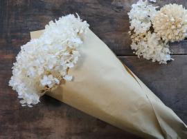 Fleur Ekte Tørket Hortensiablomst 1 stk L60 cm krem ??i brunt papir , hemmetshjarta.no