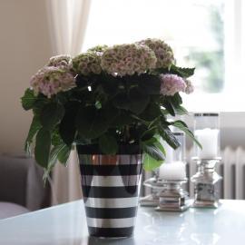 Krukke med striper Luksus 21,5 cm svart / sølv , hemmetshjarta.no