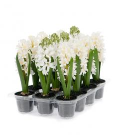 Kunstig Hyacint mix 23 cm 3-pack , hemmetshjarta.no