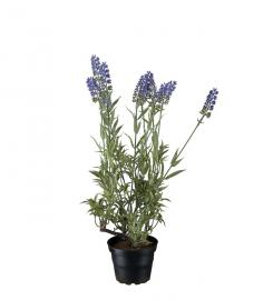 Kunstig Lavendel 45 cm , hemmetshjarta.no