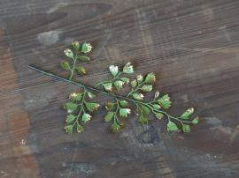Fleur Blad med glimmer H17 / L10 cm grønt , hemmetshjarta.no