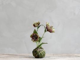 Fleur Julrose H22 cm burgunder , hemmetshjarta.no