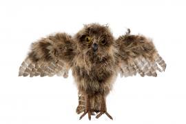 Ugle / Fly Nature 32x23cm , hemmetshjarta.no