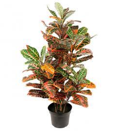 Kunstig Croton 100 cm 2-pack , hemmetshjarta.no