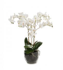 XX Kunstig Phalaenopsis 70 cm , hemmetshjarta.no